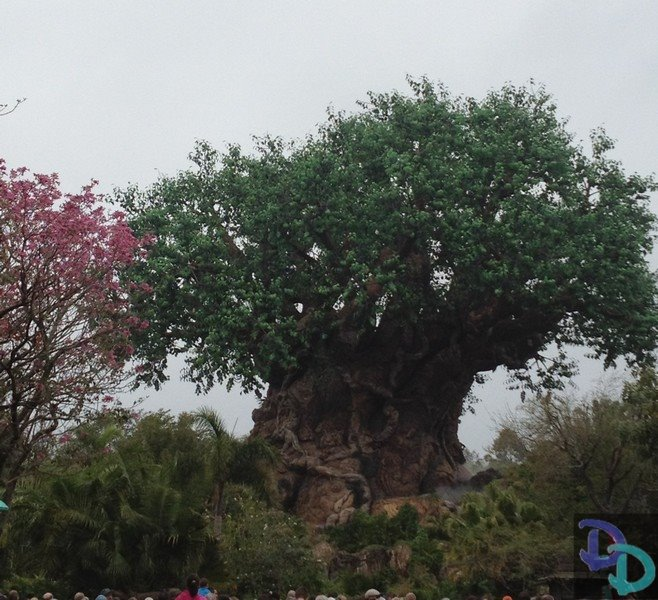 Hours Greatly Extended At Disney's Animal Kingdom Into September